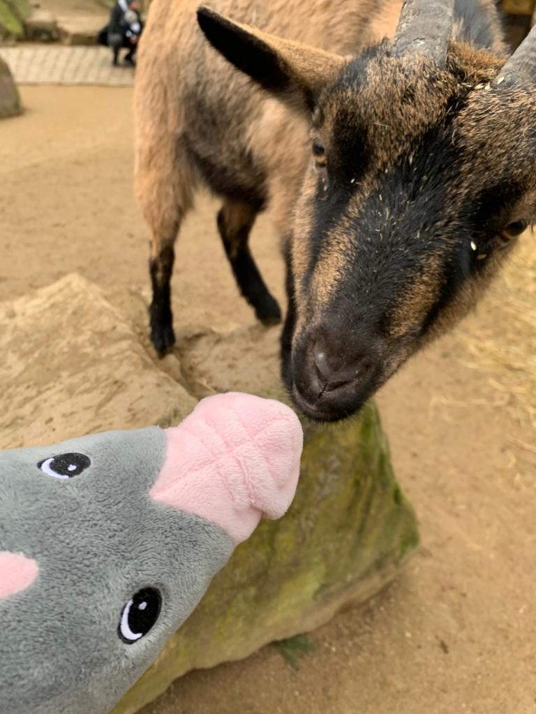 POTTPAULI mit neuem Freund Ziege