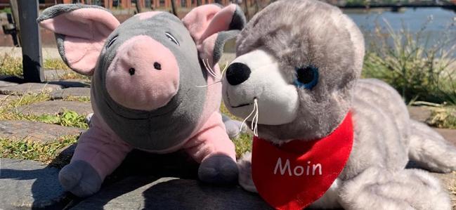 Moni Moin